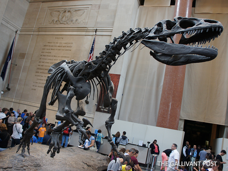 The MET, where dinosaur fossils greet you at the lobby