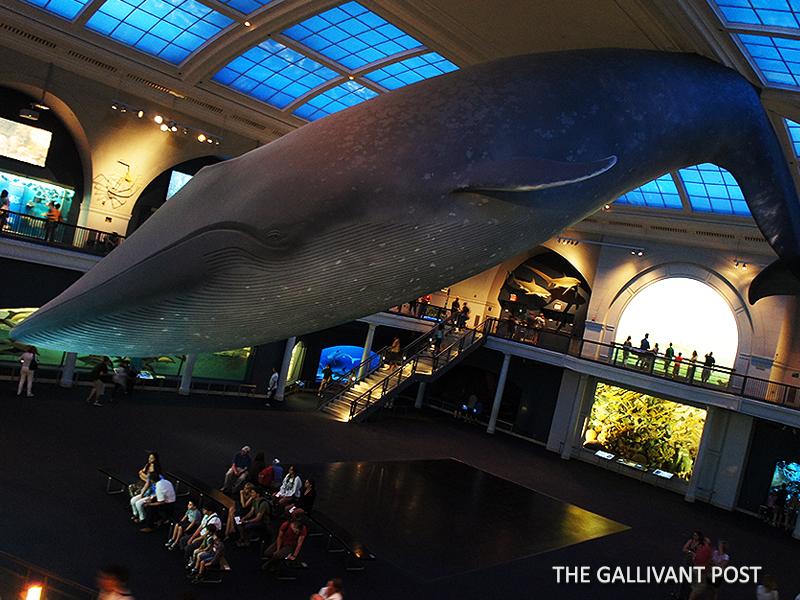 Metropolitan Museum's Ocean of Life