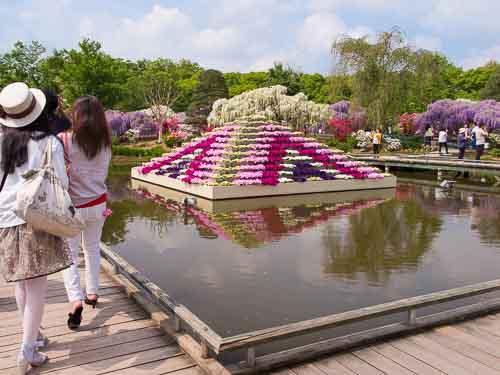 Ashikaga Flower Park flowers