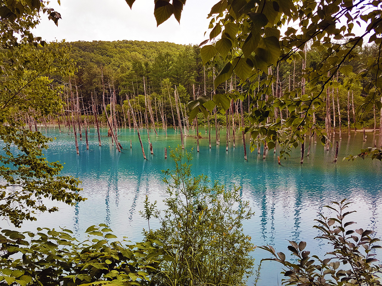 The shade of blue at the Biei Pond depends largely on the weather and season.