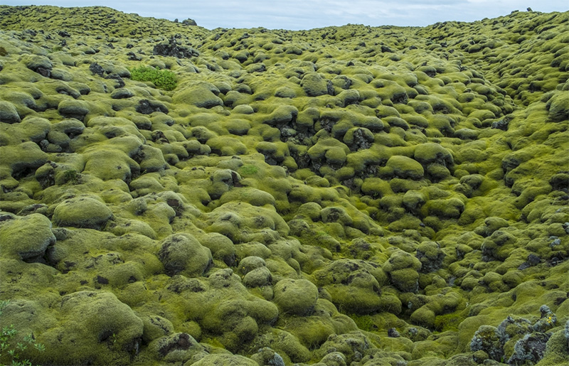 The mossy Eldhraun Lava Field