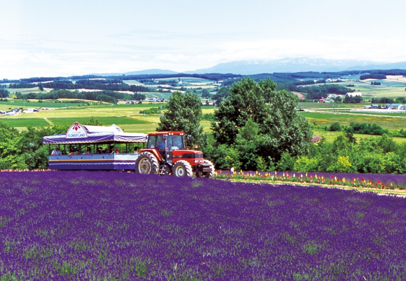 Tractor on tour at lavender fields