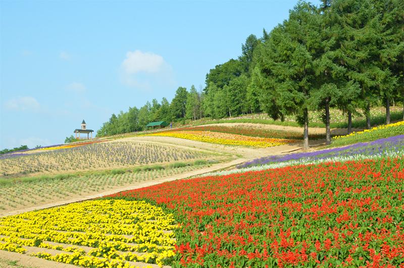 Colorful flowers at the Saika Farm