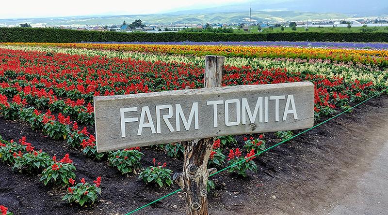 Farm Tomita Flower field