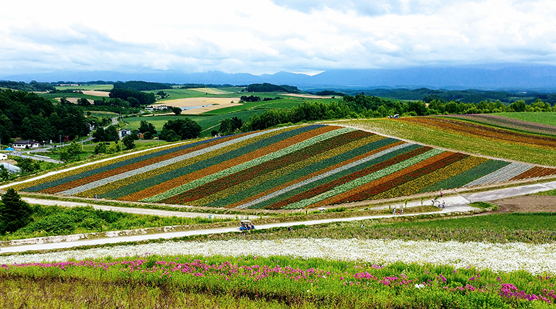 Rolling fields of colorful flowers in Farm Tomita