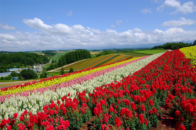 Rows of rainbow-colored flowers